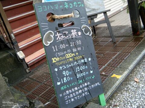 ヨコハマのネコカフェ ねこっ茶