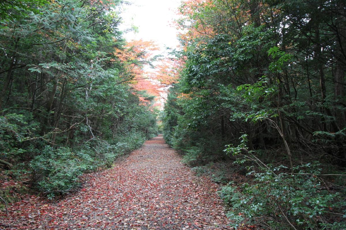 IMG_7965軽水林道