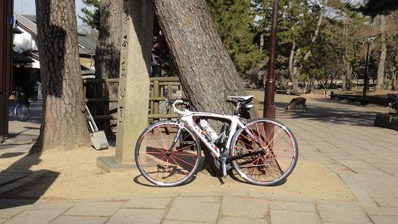 2012.1.18 奈良公園