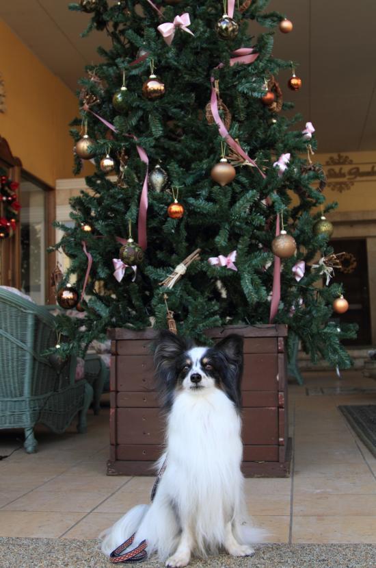 12月の犬@