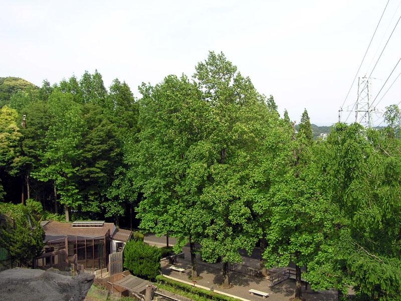 kanazawa doubutsuen yurinoki no hana