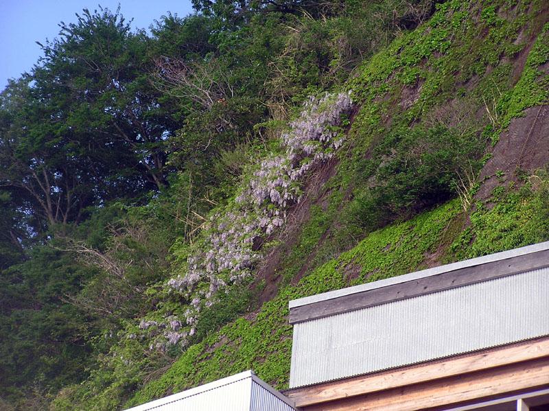 yamafuji iijima 2