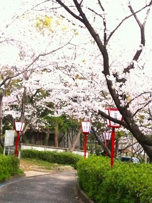 A10.04.13 016桜