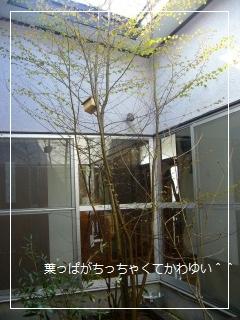 bb-004_20120416165623.jpg