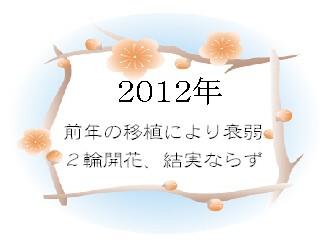 0626 梅酒 (7)
