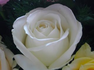 花束のバラ4