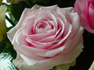 花束のバラ5