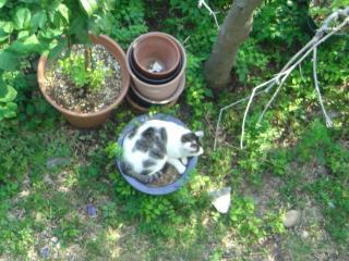 やっぱり植木鉢が好き
