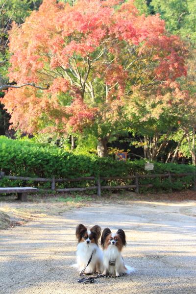 IMG_2393森林公園西宮ブログサイズ
