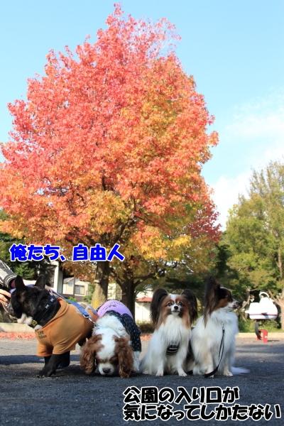 IMG_2311楓公園楓公園