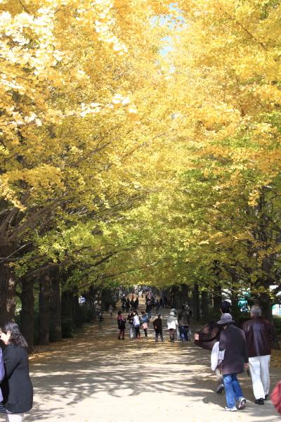 IMG_2671昭和記念公園 銀杏昭和記念公園 銀杏