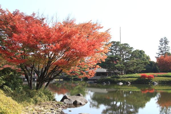 IMG_2708昭和記念公園 銀杏昭和記念公園 銀杏