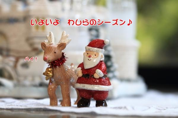 IMG_3024クリスマス ツリー