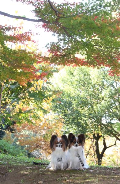 IMG_2728ふるさと公園秋のふるさと公園
