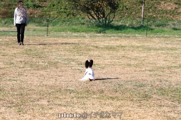 2008_8_30 シャンプーIMG_3262平塚 トレーナーズクラブ競技会