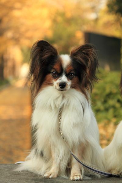 IMG_9670犬@犬@
