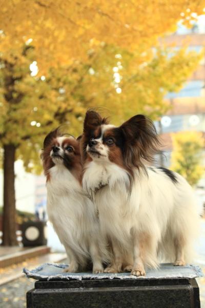IMG_9721犬@犬@