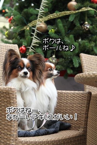 IMG_9806犬@犬@