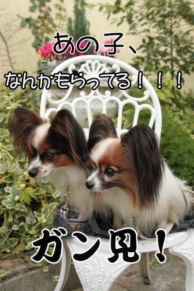 IMG_9808犬@犬@
