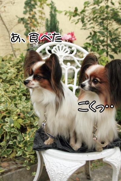 IMG_9809犬@犬@