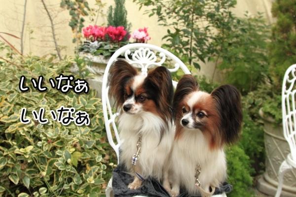IMG_9812犬@犬@