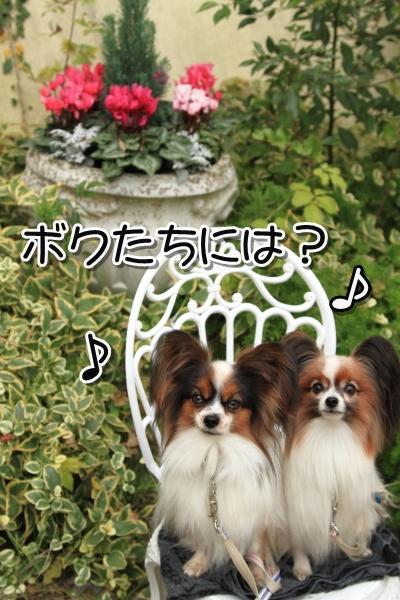 IMG_9813犬@犬@