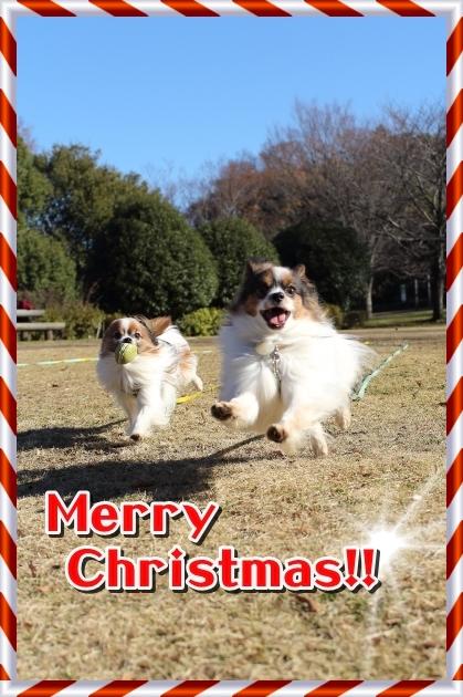 IMG_2822クリスマスのふるさと公園クリスマスのふるさと公園