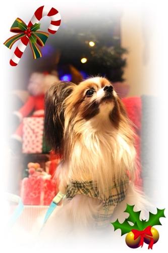 IMG_2914クリスマス