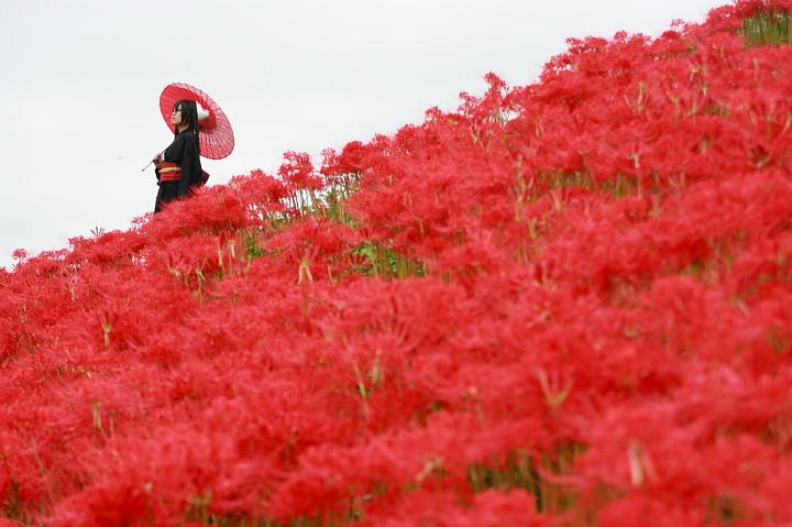 結ンデ開イテ羅刹ト骸/VOCALOID/初音ミク/彼岸花ロケ