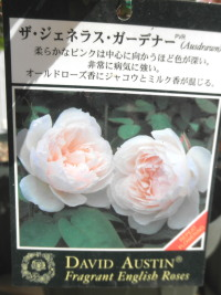 P3220009.jpg