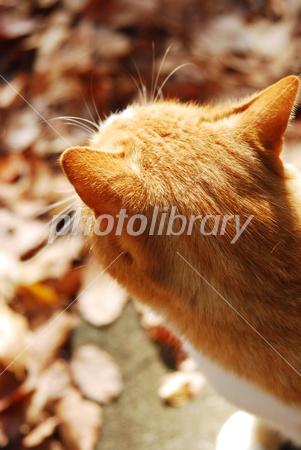 2788090 猫の後頭部