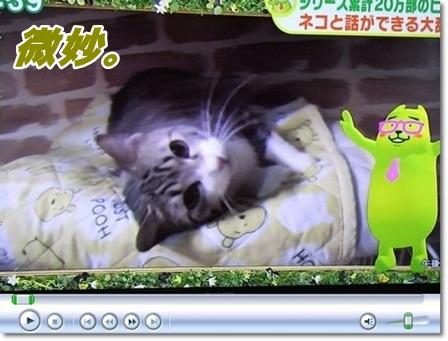 ネコと話ができる大辞典