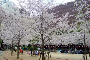 Shin-machi-Park_1004-25.jpg