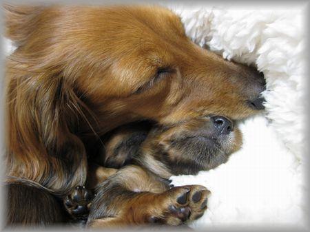 シェリーと子犬