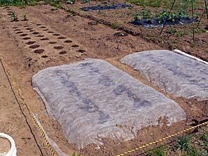 全ての作物の植え付けが完了! 5月16日