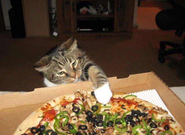 cat00646.jpg