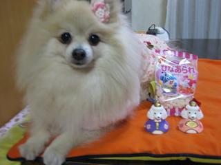 ルル子さん7歳!
