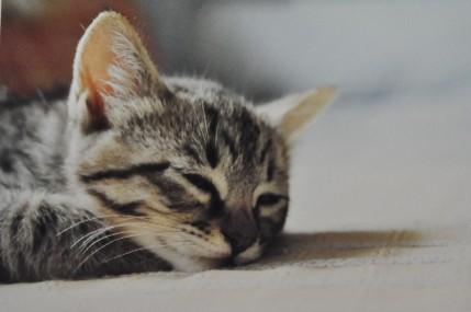 baby shige takes a nap