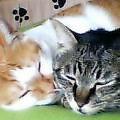maron shige nap together