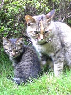 chiimama & her baby2