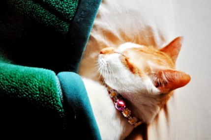 maron sleeps btwn blankets