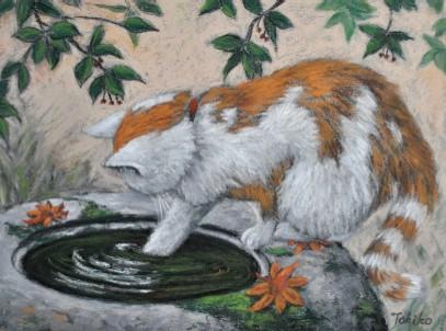 maron-like cat in fall
