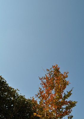autumn shara w cloudless sky