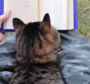 chi reads a book3