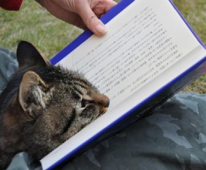 chi reads a book