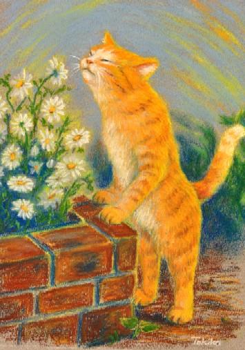 orangetabby smells flower