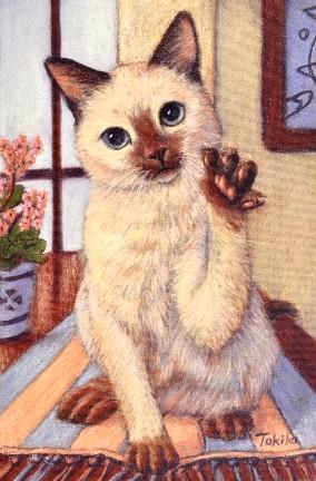 takuro cat