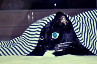 mimi under the shirt