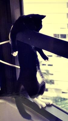 mimi stuck by the window