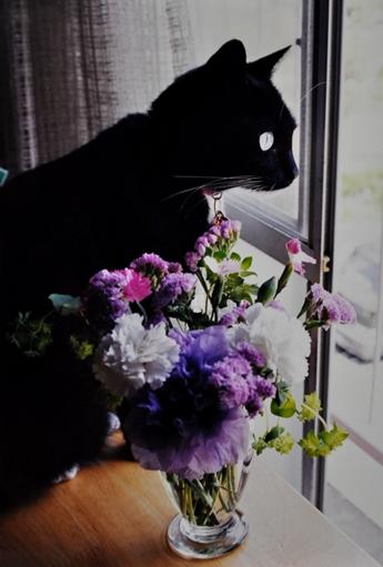 mimi by the window w flowers